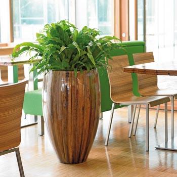 Hydrokultur Ist Trend Und Design Mit Pflanzen Hiebinger